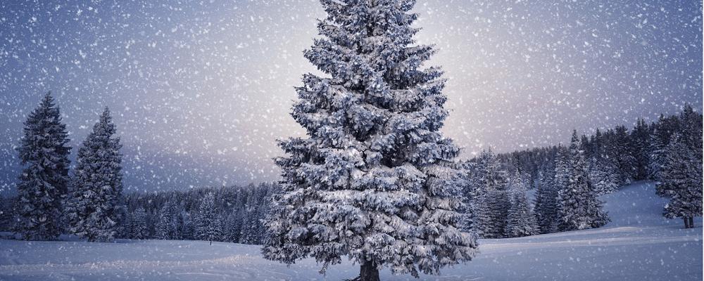 Decembermaand – Aanbiedingmaand